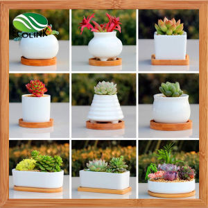 Ceramic & Bamboo Succulent Pot/ Scculent Planter pictures & photos
