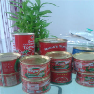 Canned Fresh Tomato Paste for Sale