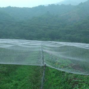 UV Protection Anti Bird Net pictures & photos