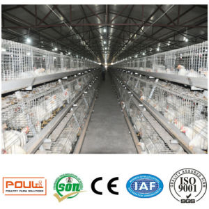 Broiler Chicken Cages System Equipment pictures & photos