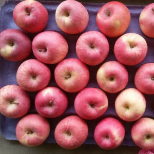 Golden Supplier for Fresh Fruits Fresh Apple pictures & photos