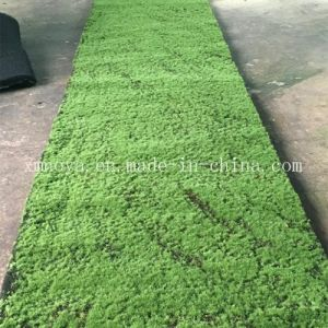 Eco-Friendly Artificial Fake Green Sheet / Carpet Moss for Wall Decoration pictures & photos