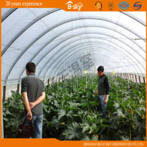 Hot Sale Hoop Greenhouse for Growing Vegetables pictures & photos