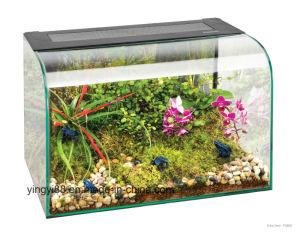 Popular Clear Acrylic Reptile Terrarium pictures & photos