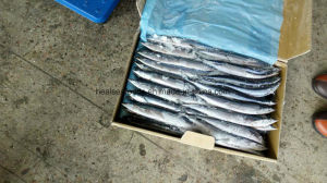 Sea Frozen Pacific Saury From China pictures & photos