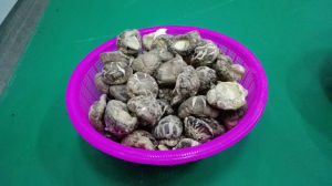 Popular & Low Price Dried Tea Flower Shiitake Mushroom pictures & photos
