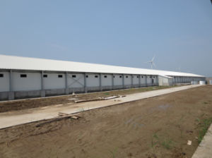Steel Sheet Chicken Farm Shed with Equipments pictures & photos