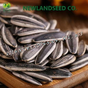 2016 Hot Sale New Type Sunflower Seeds From Mongolia to World pictures & photos