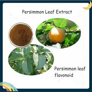 Persimmon Leaf Extract, Persimmon Leaf Flavonoid 30% pictures & photos