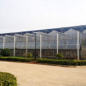 Venlo Plastic Film Multi Span Greenhouse for Vegetable Growing pictures & photos