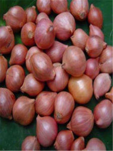 New Crop Fresh Shallot Vegetable pictures & photos