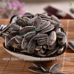 High Quality Roasted and Salted Sunflower Seeds for Export pictures & photos
