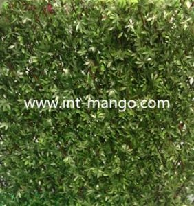 UV Protction Artificial Willow Garden Hedge (MW16020) pictures & photos