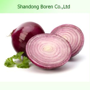 Fresh Onion Produced in China