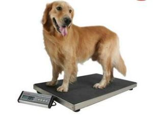Digital Pet Scale Dog Scale pictures & photos
