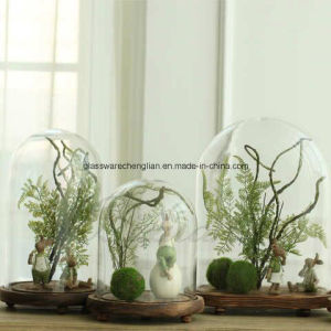 Glass Vases with Wooden Support (V-025) pictures & photos