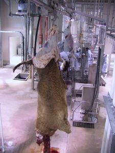 Cattle and Goat Slaughterhouse pictures & photos