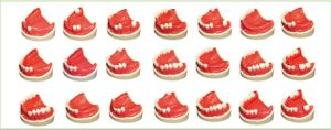 TM-E5 Teeth Missing with Silicon Rubber 32PCS/Set pictures & photos