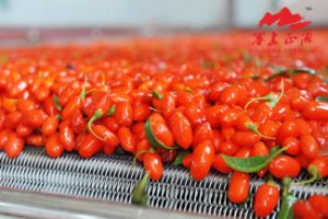 Low Pesticide Residues Goji Berry 500