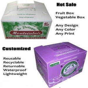Coroplast Box, Correx Box, Corflute Box, Cartonplast Box, PP Box