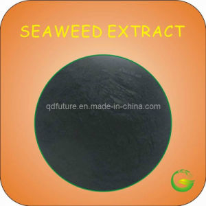 Brown Seaweed Extract Powder pictures & photos