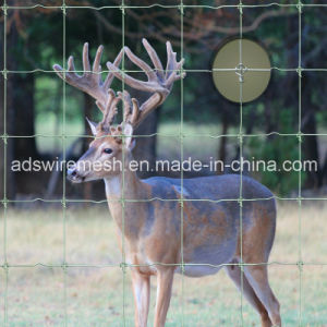 Fixed Knot Fence/Game Fence/Deer Fence/Horse Fence/Goat Fence pictures & photos