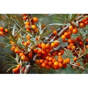 Fruit Sea Buckthorn Oil