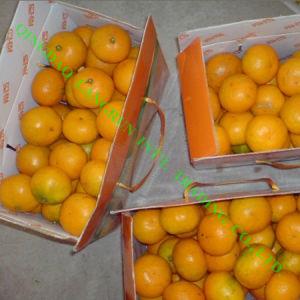 Fresh Mandarin Orange/Honey Orange