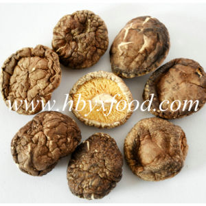 Different Sizes Dried Smooth Shiitake Mushroom pictures & photos