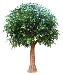 Artificial Banyan Tree with Factory Price pictures & photos