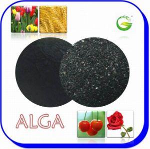 China Organic Fertilizer Seaweed Fertilizer pictures & photos