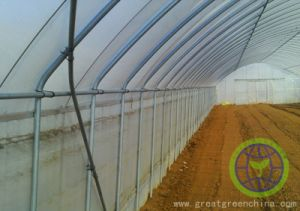 Po and PE Film for Greenhouse pictures & photos