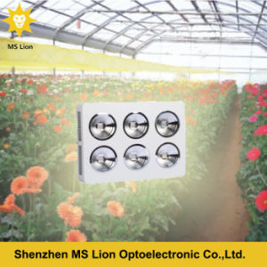 Veg Bloom Growing Full Spectrum COB LED Grow Light 1200W