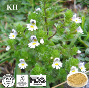 Good for Your Eyes From Eyebright Extract pictures & photos