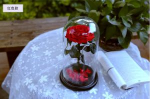 Natural Real Fresh Rose Flower Glass Cover Eternal Love pictures & photos