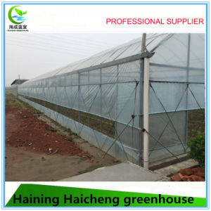 Plastic Film Greenhouse for Seed-Breeding pictures & photos