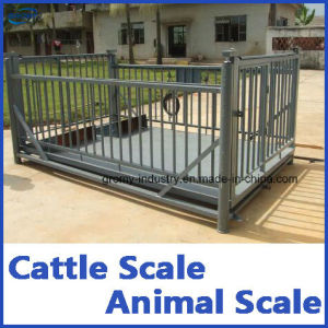 Digital Scale Pig Scale Livestock Scale True-Test Livestock Scale pictures & photos