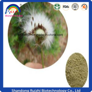 Herbal Products Wholesaler Supply Dandelion Root Extract pictures & photos