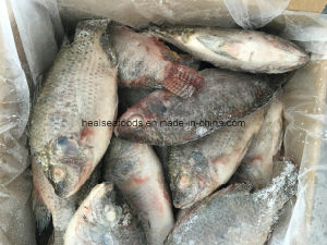 Hot Sale-Chinese Farmed Frozen Black Chopa pictures & photos