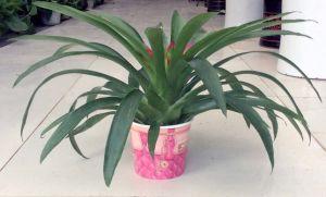 Environmental Paper Flower Pot Yh-L117 pictures & photos