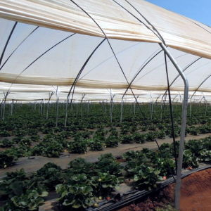 New Design Hot Sale Steel Frame High Tunnel Film Greenhouse pictures & photos