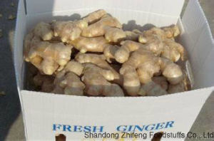 Fresh Ginger with High Exporting Standard in 2017 pictures & photos