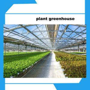 Multi-Span Plastic Film Greenhouse for Vegetables More Cheaper pictures & photos