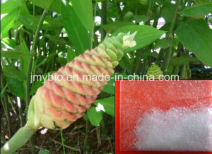 Pure Natural Zingiber Zerumbone Smith Extract, 10: 1, 20: 1, Zerumbone 99% pictures & photos