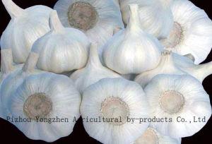 2010 Pure White Garlic