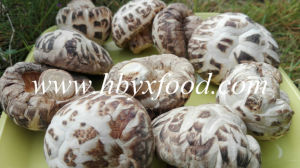Brands Mushrooms, White Flower Shiitake, Dried Vegetable