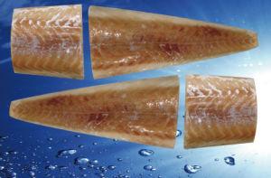Frozen Saithe Fillet Portion, Saithe Fish