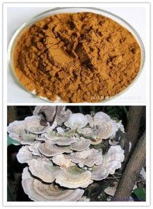 Coriolus Versicolor Mushroom Extract