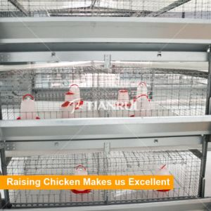 Day Old Layer/Broiler Chicks Used Automatic Chicken Cage System for Pullet pictures & photos