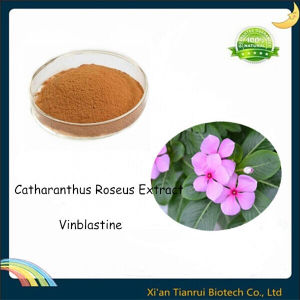 Vinca Rosea Extract, Catharanthus Roseus Extract Vinblastine pictures & photos